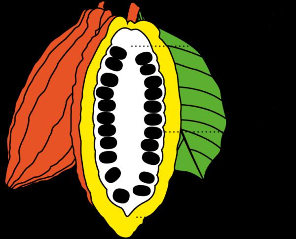 cocaovrucht